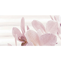 AMALIA ORCHID 25X50 DECOR 1